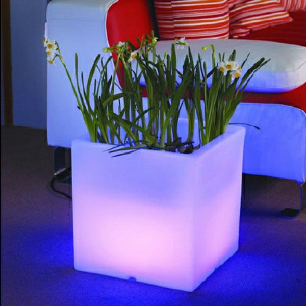 Blumentöpfe-Lila-Beleuchtung-Narzisse