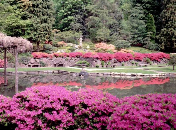 Gärten-in-Japanischem-Stil-rosa-Blumen-Design-Idee