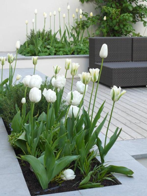 Gartenterrassen-mit-weißen-Tulpen-Design-Idee