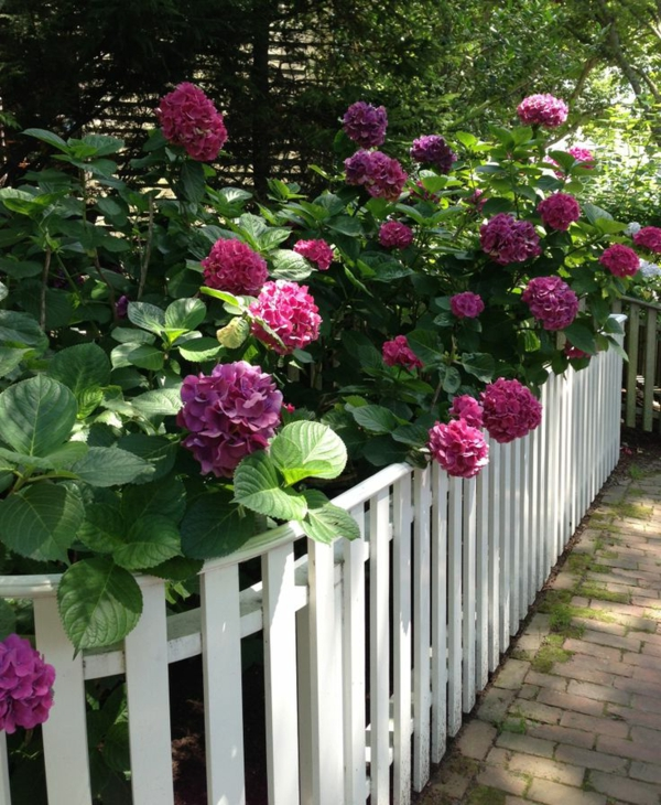 Gartengestaltung-Gartenzaun-aus-Holz-in-Weiß