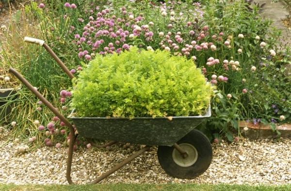 Schubkarren-mit-Pflanzen-bedeckt-Deko-Idee
