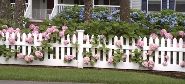 Zaun-aus-Holz-in-weißer-Farbe-rosa-Blumen