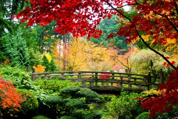 schöner-bunter-Japanischer-Garten-mit-Brücke-