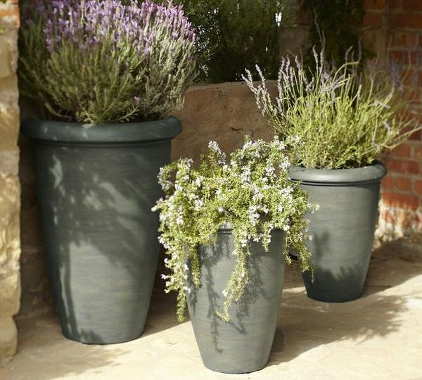 grüne-pflanzen-als-gartendeko-ideen