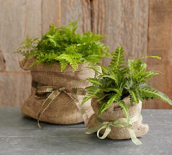grüne-pflanzen-für-den-garten