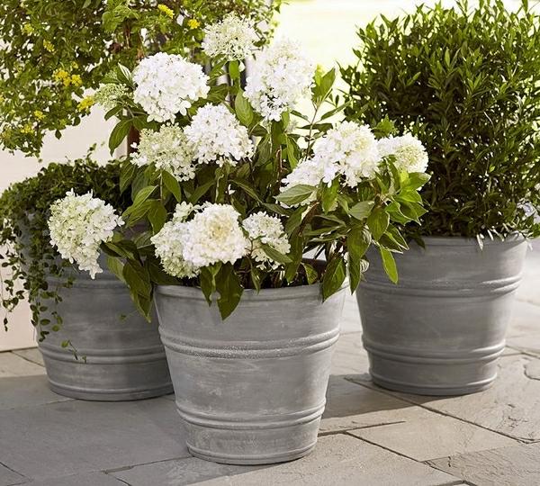 Groß Grüne Pflanzen Mit Weißen Blumen Fotos - Kleider und Blumen ...