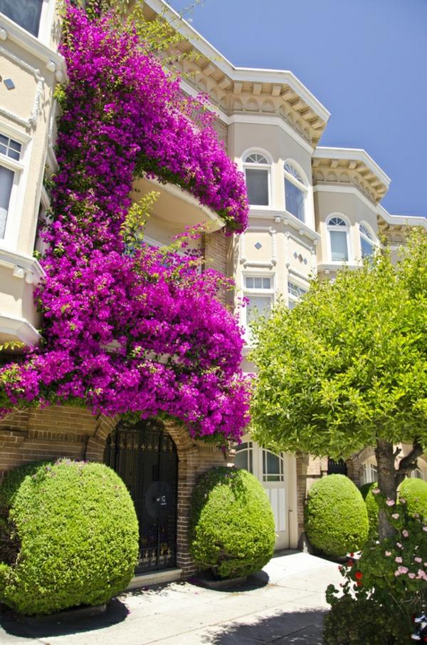 grelle-farben-kletterpflanzen-für-balkon