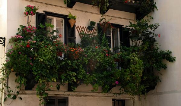 inspirierende-kletterpflanzen-für-balkon
