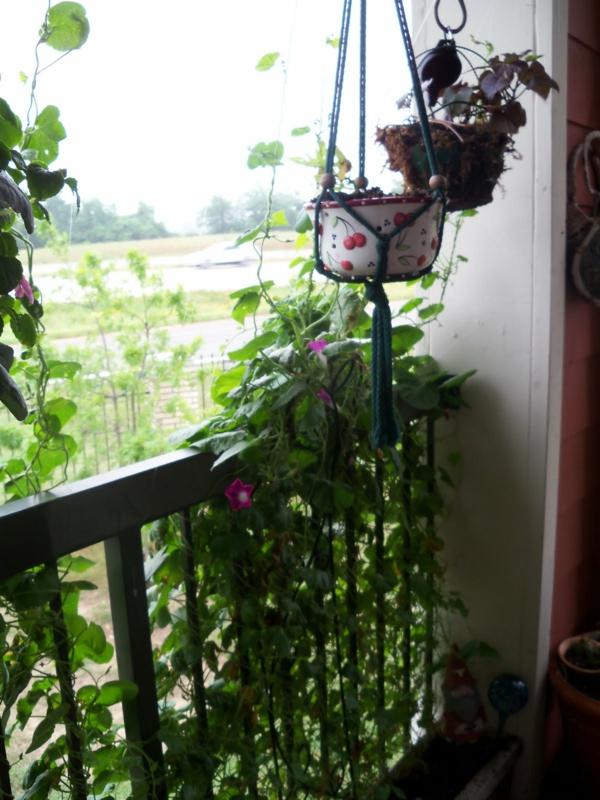 cooles bild wohnzimmer:Jetzt zeigen wir Ihnen weitere interessante Bilder von Kletterpflanzen