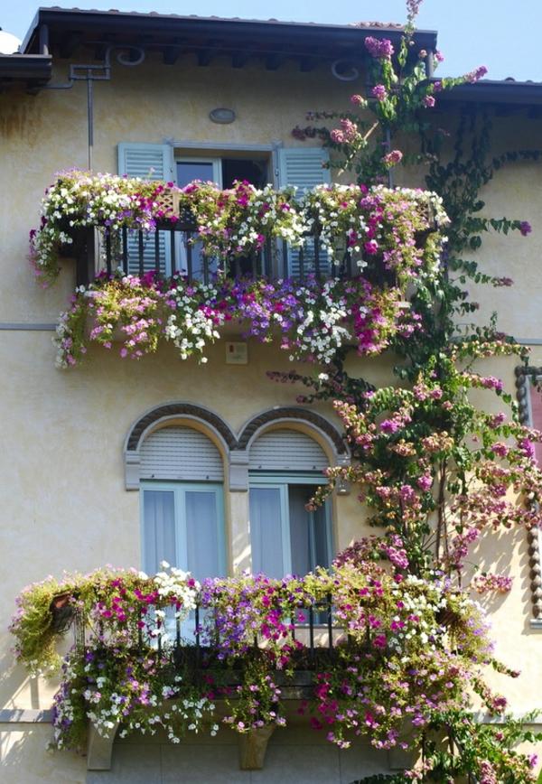 kletterpflanzen-für-balkon-gemütlich-erscheinen