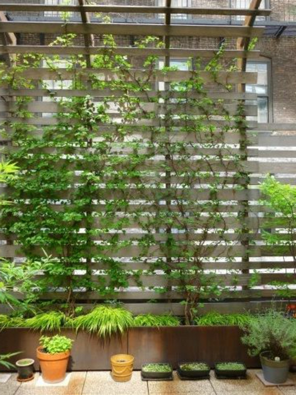 kletterpflanzen balkon kletterpflanzen auf balkon und. Black Bedroom Furniture Sets. Home Design Ideas