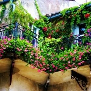 Kletterpflanzen für Balkon - 27 super Ideen!