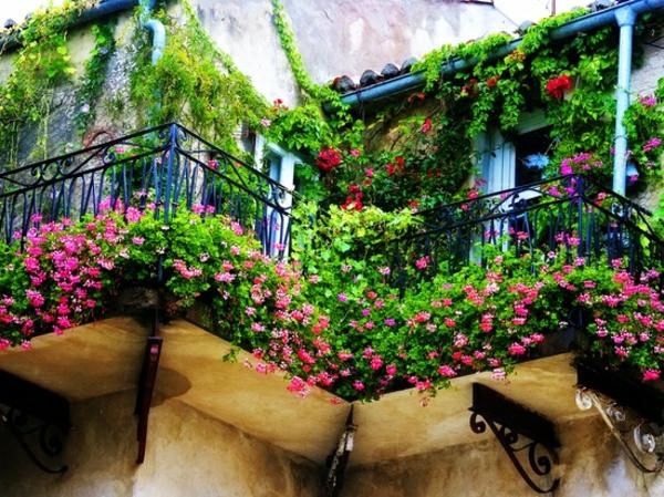 Kletterpflanzen Auf Balkon Und Terrassen ? Sichtschutz Und ... Kletterpflanzen Balkon Und Terrassen