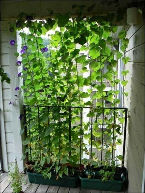 Kletterpflanzen für balkon   27 super ideen!   archzine.net