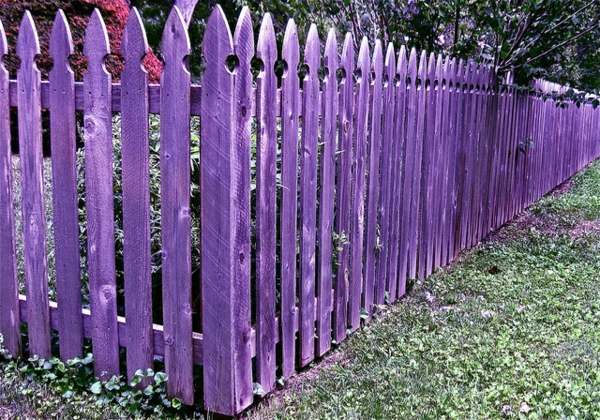 toller-lila-Zaun-im-Garten-Gartengestaltung