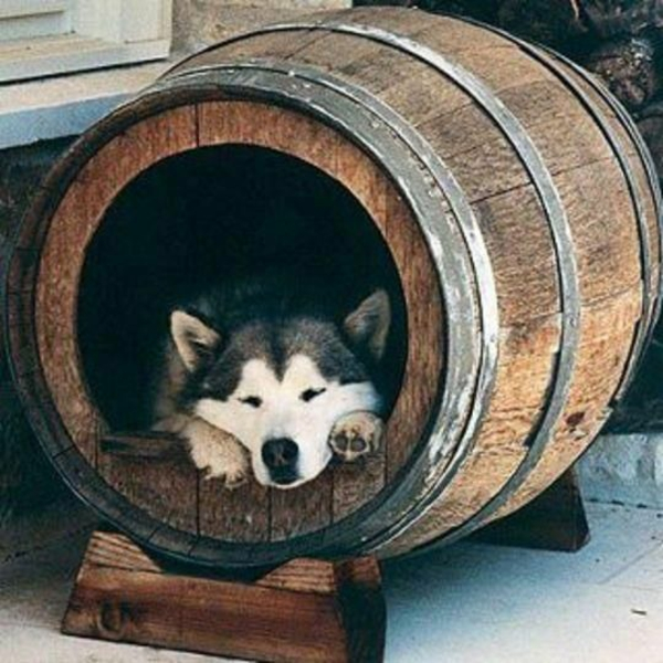 Hundehütte Selber Bauen Super Ideen Archzine Net