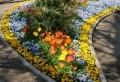 Stiefmütterchen pflanzen – 40 coole Bilder!