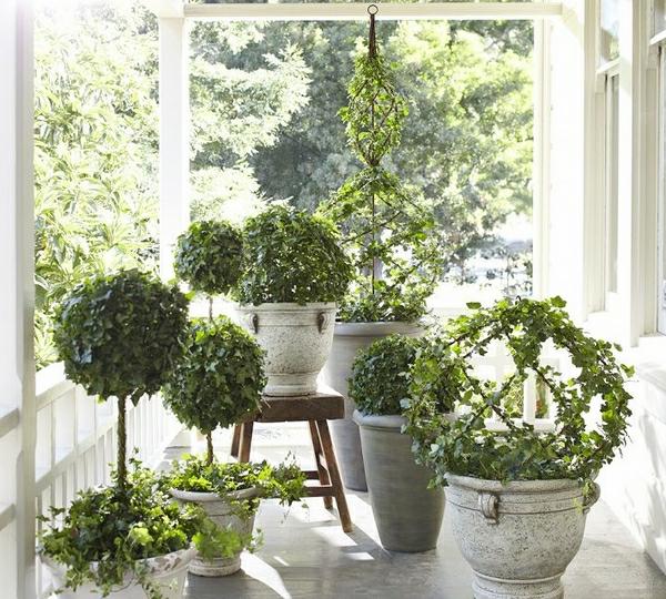 schöne-grüne-pflanzen-gartendeko-ideen