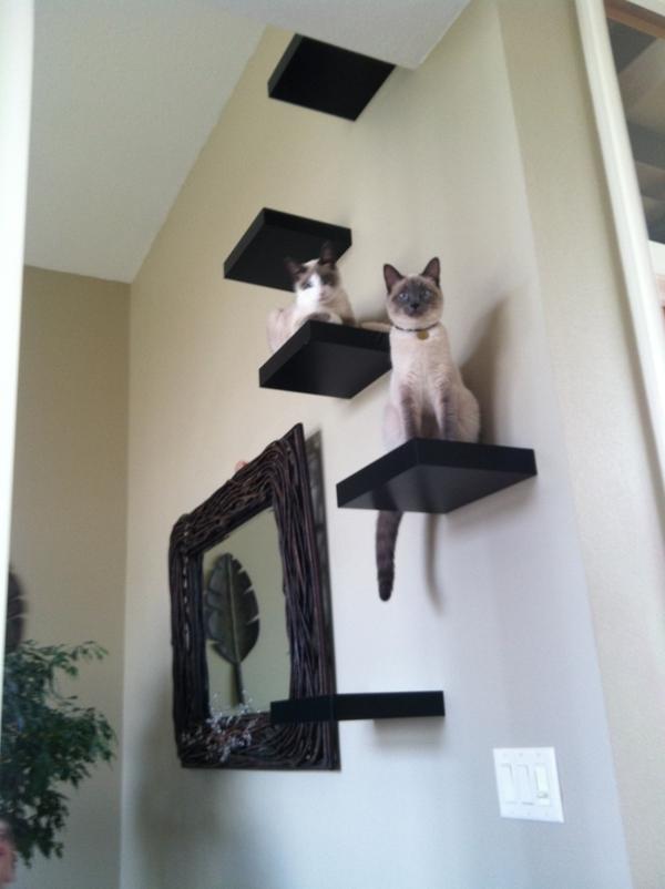 schmale-regale-an-einer-weißen-wand - mit zwei katzen darauf