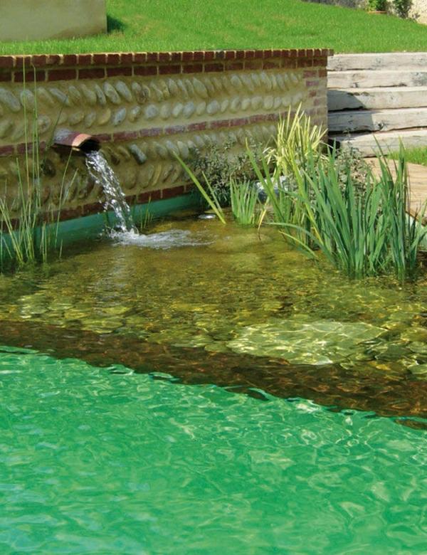schwimmteich-bilder-grünes-wasser