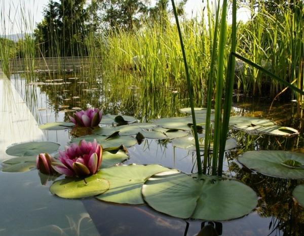 schwimmteich-bilder-rein-in-der-natur