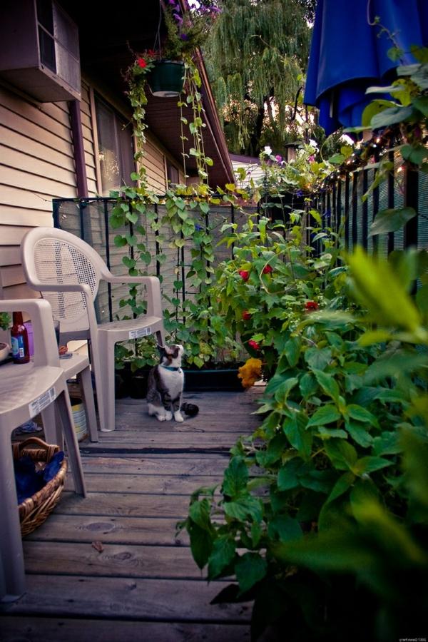sehr-schöne-kletterpflanzen-für-balkon
