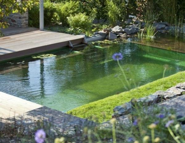 sehr-schöne-schwimmteich-bilder