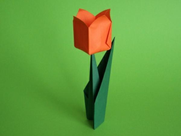 stehende-tulpe - grüner hintergrund