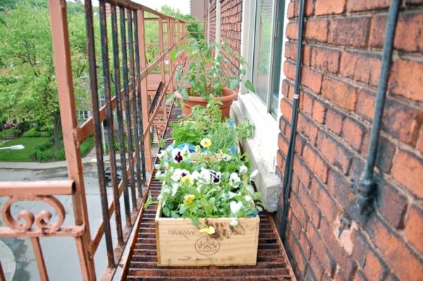 stiefmütterchen-pflanzen-auf-den-balkon-stellen - neben ziegelwänden