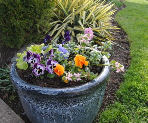 stiefmütterchen-pflanzen-foto-vom-nahen-genommen