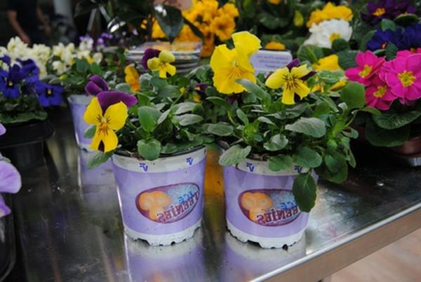stiefmütterchen-pflanzen-gelb-und-schön-aussehen