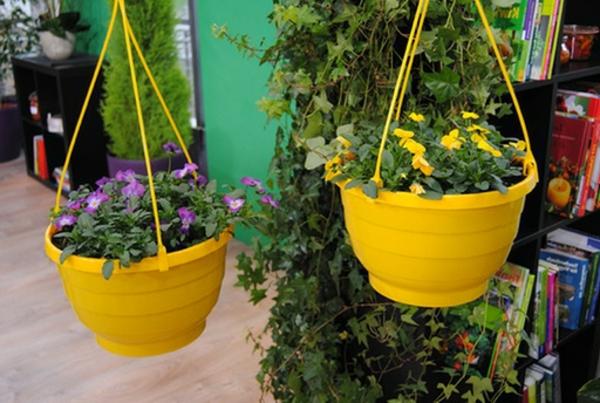 stiefmütterchen-pflanzen-zwei-gelbe-hängende-töpfe
