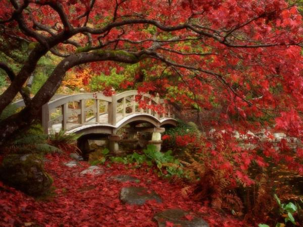 wunderbarer-Garten-in-Japanischem-Stil-rote-Blätter
