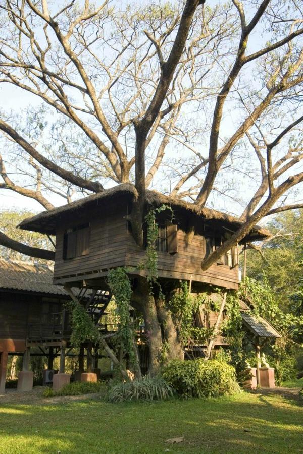 Baum Im Haus Coole Idee
