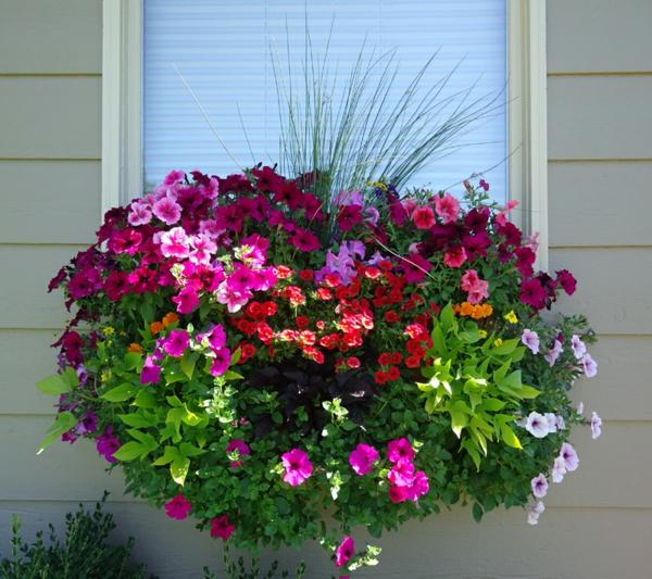 Blumenkasten-für-Balkon-wunderbare-Blumen