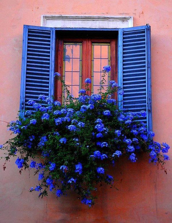 Blumenkasten-für-den-Balkon-blaue-Blumen-blaue-Fensterrahmen