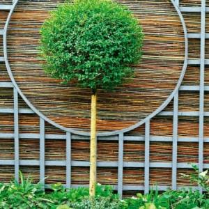 Bambus Sichtschutz - schön und öko-freundlich!