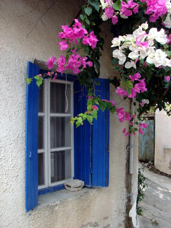 Fensterladen-aus-Holz-blaue-Farbe-Blumen