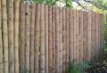 Bambus Sichtschutz – schön und öko-freundlich!