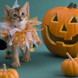 Halloween Kürbis schnitzen - coole Ideen!