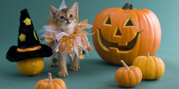 lustiger-Halloween-Kürbis-schnitzen