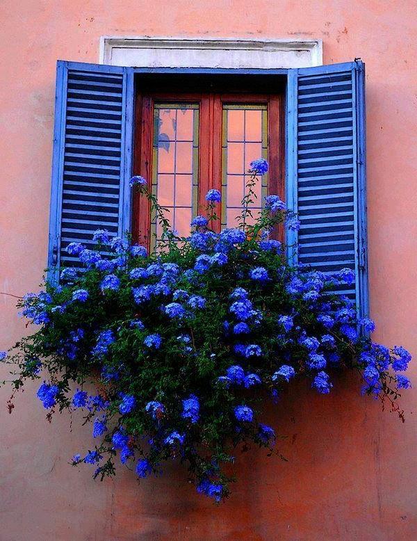 tolle-blaue-Fensterläden-aus-Holz