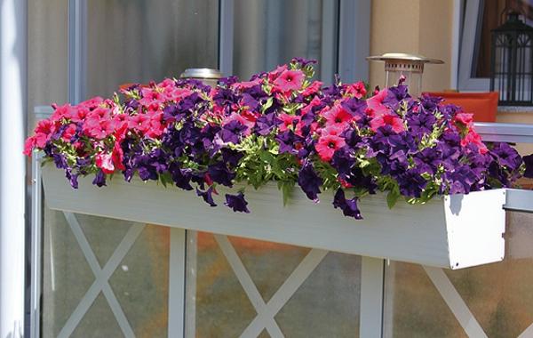 weißer-Blumenkasten-für-den-Balkon