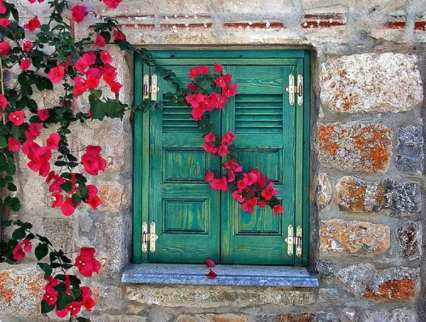 grüne-Fensterläden-rote-Blumen