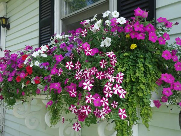 wunderbarer-Blumenkasten-für-den-Balkon