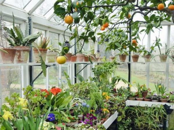 bunte-pflanzen-im-wimtergarten