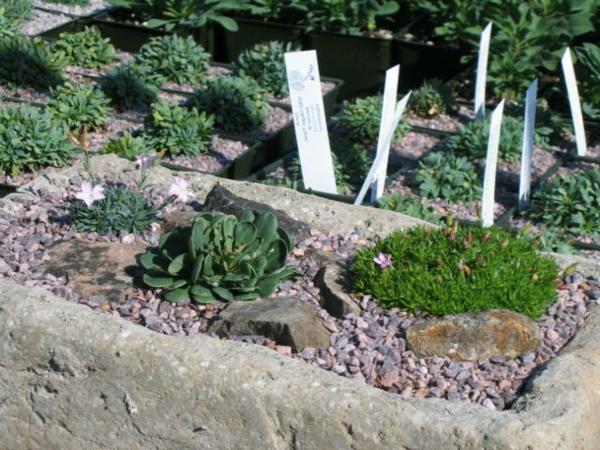 interessante-gestaltung-steingarten