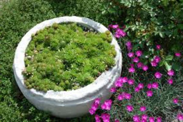 moderner-steingarten-cool-aussehen