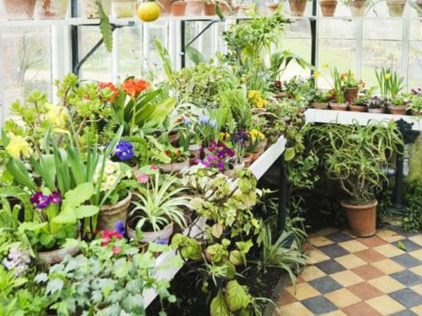 pflanzen-im-wintergarten