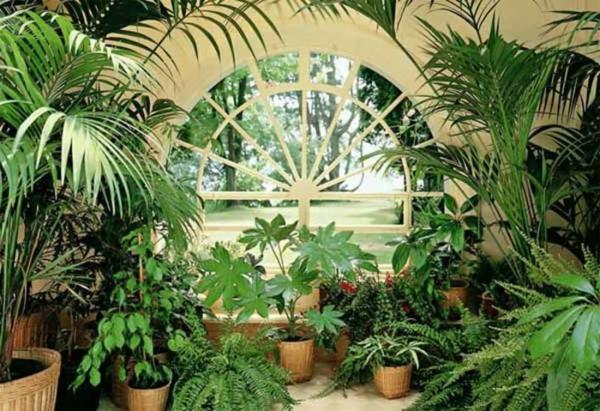 wintergarten-gestalten-mit-palmen